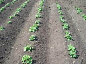 Farm Pics 1-7-2012 016