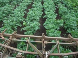 Farm Pics 1-7-2012 040