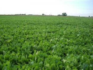 Farm Pics 1-7-2012 054